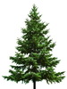 Christmas tree recycling drop off sites