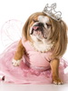 Dog in Dress_thumb